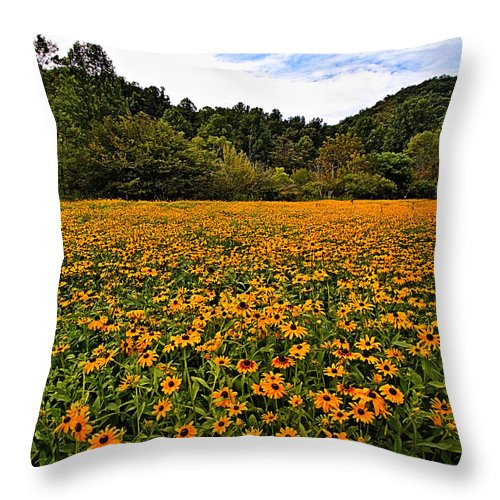 Black-eyed Susans Throw Pillow featuring the photograph Black-eyed Susans by Mel Hensley