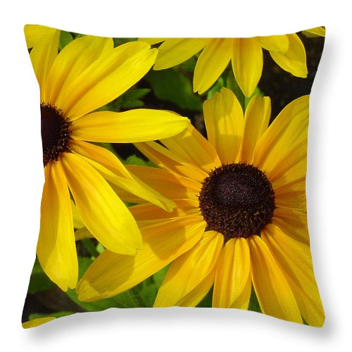 Black Eyed Susan Throw Pillow featuring the photograph Black Eyed Susans by Suzanne Gaff