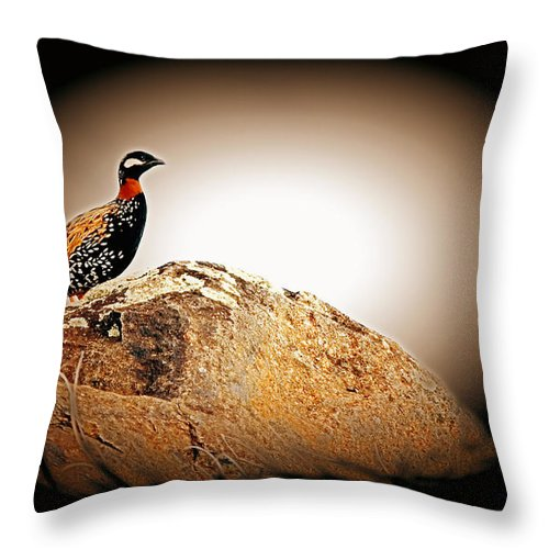 Black Francolin Throw Pillow featuring the photograph Black Francolin by Jim Cazel