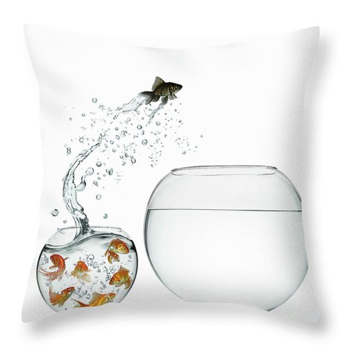 Pets Throw Pillow featuring the photograph Black Goldfish by Gandee Vasan