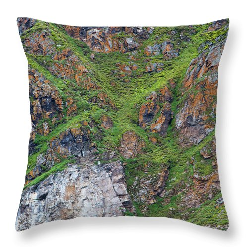 Grass Throw Pillow featuring the photograph Black Legged Kittiwake Cliffs In The by Anna Henly