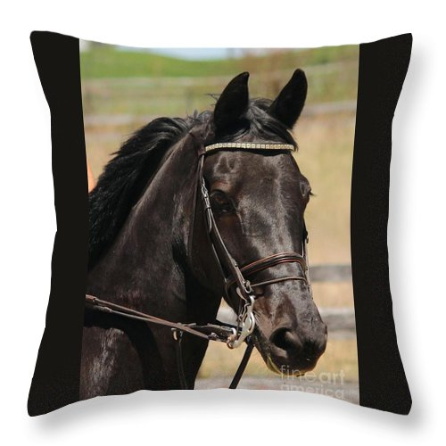 Horse Throw Pillow featuring the photograph Black Mare Portrait by Janice Byer