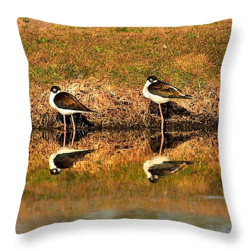 Water Throw Pillow featuring the photograph Black-necked Stilts by Robert Bales