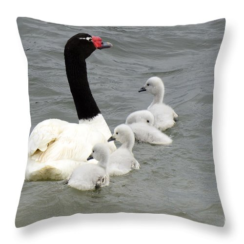 Bird Throw Pillow featuring the photograph Black Necked Swan Patagonia by Bob Christopher