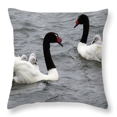 Bird Throw Pillow featuring the photograph Black Necked Swans Patagonia 1 by Bob Christopher