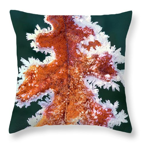 North America Throw Pillow featuring the photograph Black Oak Leaf Rime Ice Yosemite National Park California by Dave Welling