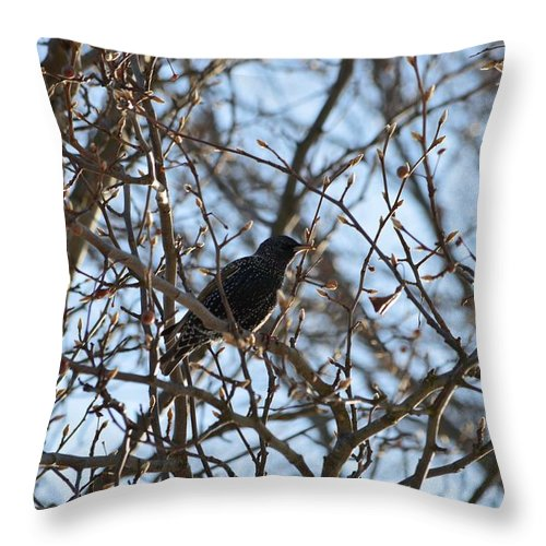 Black Starling Throw Pillow featuring the photograph Black Starling by Sonali Gangane