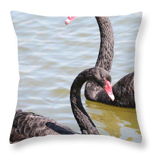 Black Swan Throw Pillow featuring the photograph Black Swan Pair by Carol Groenen