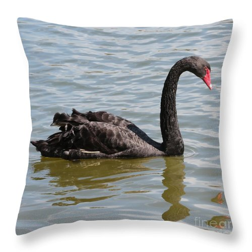 Black Swan Throw Pillow featuring the photograph Black Swan Square by Carol Groenen