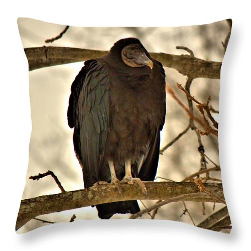 Nature Throw Pillow featuring the photograph Black Vulture 1 by John Feiser