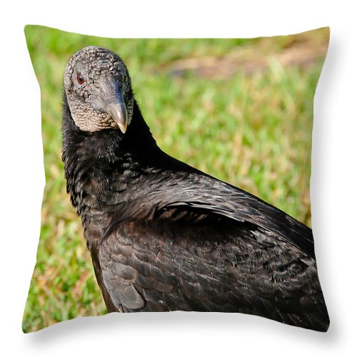 Florida Throw Pillow featuring the photograph Black Vulture by Don and Bonnie Fink