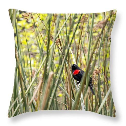 Bird Throw Pillow featuring the photograph Blackbird In Reeds by Kate Brown
