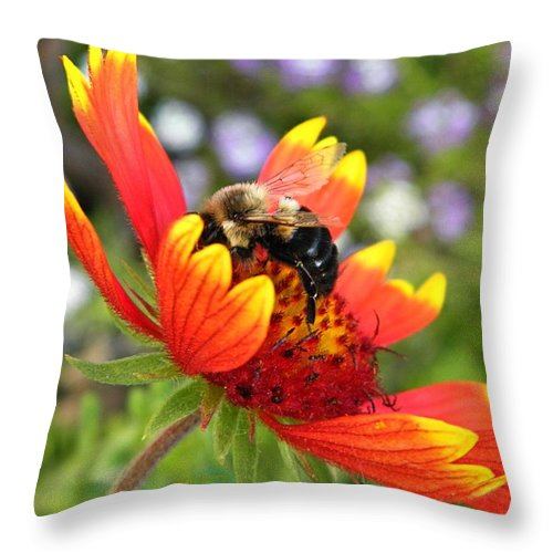 Flower Throw Pillow featuring the photograph Blanket Flower And Bumblebee by Chris Berry