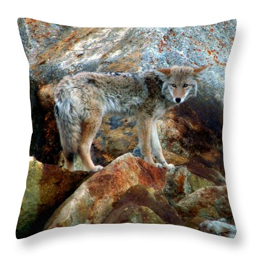 Coyotes Throw Pillow featuring the photograph Blending In Nature by Karen Wiles
