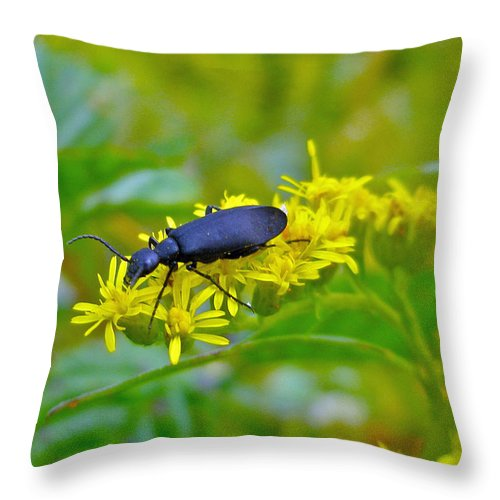 Beetle Throw Pillow featuring the photograph Blister Beetle On Yellow Autumn Flowers by Mother Nature
