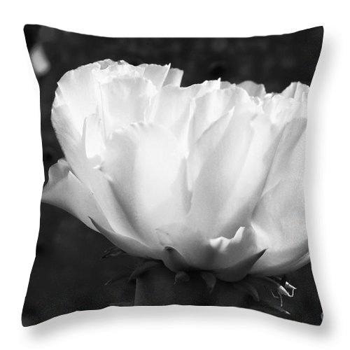 Inks Lake State Park Texas Prickly Pear Cactus Flower Cacti Flowers Bloom Blooms Blossom Blossom Spine Spines Still Life Black And White Spring Throw Pillow featuring the photograph Blooming Cactus 2 by Bob Phillips