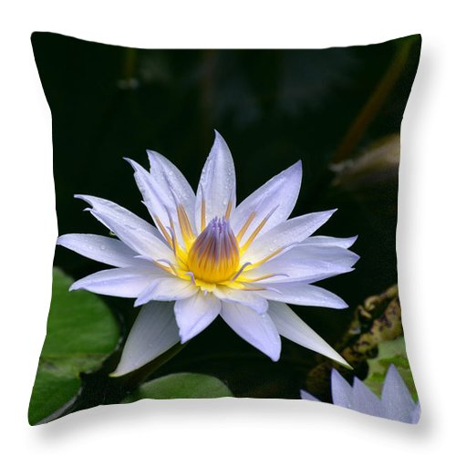 Water Lily Throw Pillow featuring the photograph Blooming Lavender Water Lily by DejaVu Designs