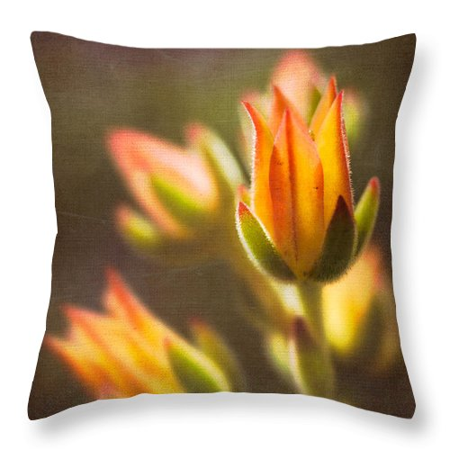 Nature Throw Pillow featuring the photograph Blooming Succulents V by Marco Oliveira