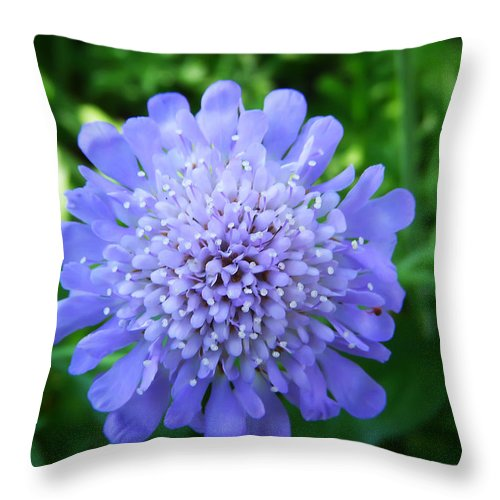Flower Throw Pillow featuring the photograph Blue by Aimee L Maher ALM GALLERY