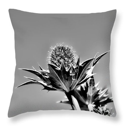 Sky Throw Pillow featuring the photograph Blue And Green Bw Green Plant In Front Of A Blue Sky by Leif Sohlman