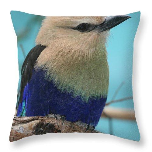 Bird Throw Pillow featuring the photograph Blue-bellied Roller by Ken Keener