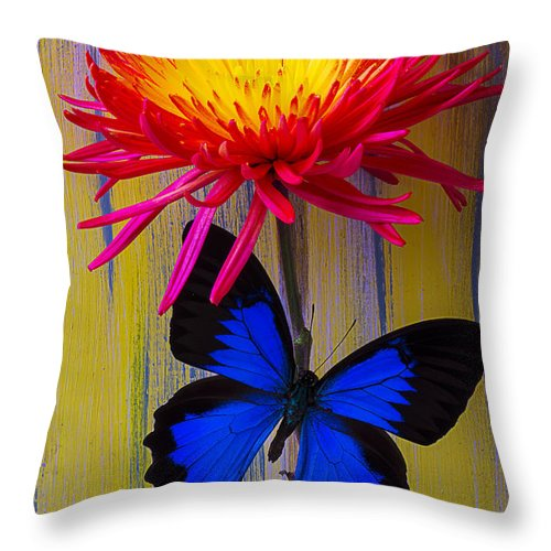 Red Yellow Spider Throw Pillow featuring the photograph Blue Butterfly On Fire Mum by Garry Gay