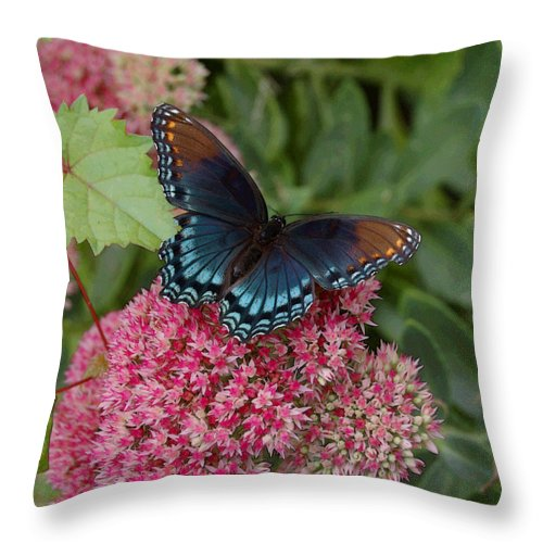 Blue Throw Pillow featuring the photograph Blue Butterfly by Suzanne Gaff