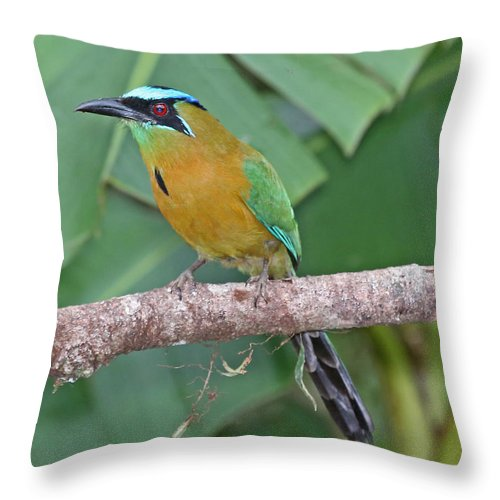 Nature Throw Pillow featuring the photograph Blue-crowned Motmot 1 by Mike Dickie