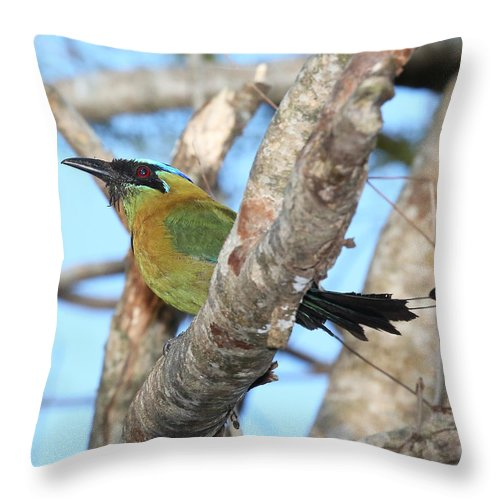 Nature Throw Pillow featuring the photograph Blue-crowned Motmot by Mike Dickie