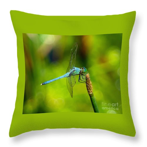 Dragonfly Throw Pillow featuring the photograph Blue Dragonfly 2 by Stephen Whalen