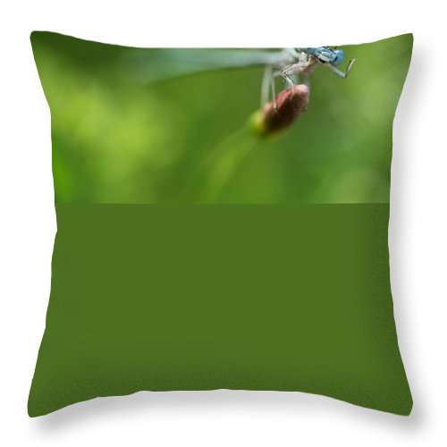 Macro Throw Pillow featuring the photograph Blue Dragonfly Sitting On A Dry Red Plant by Jaroslaw Blaminsky