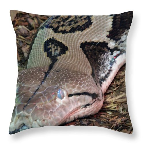 Blue Throw Pillow featuring the photograph Blue Eyes Snake by Munir Alawi