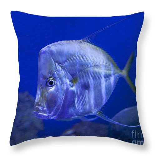 Fish Throw Pillow featuring the photograph Blue Fish  #4990 by J L Woody Wooden