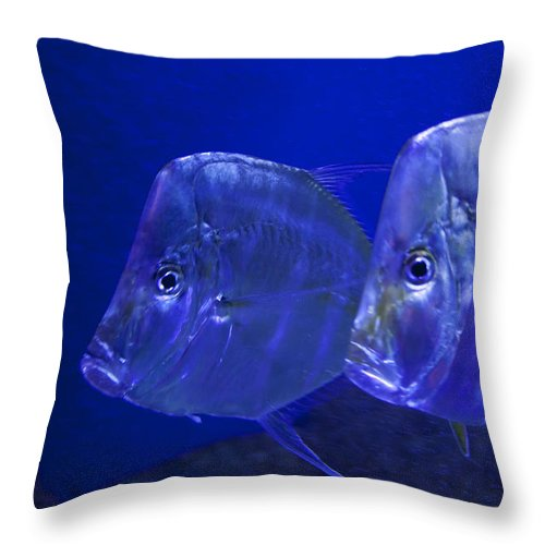 Fish Throw Pillow featuring the photograph Blue Fish  #4991 by J L Woody Wooden