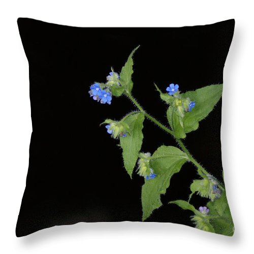 Blue Throw Pillow featuring the photograph Blue Flowers by Carol Lynch