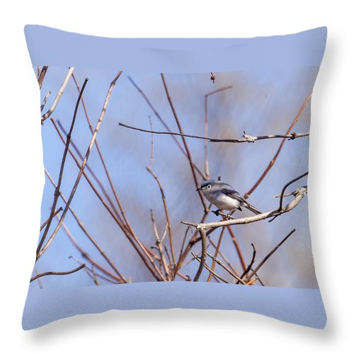 Animal Throw Pillow featuring the photograph Blue-gray Gnatcatcher by Jack R Perry