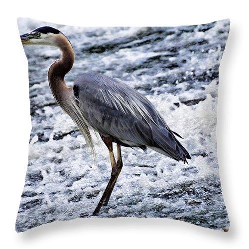 Blue Heron Throw Pillow featuring the photograph Blue Heron Fishing V3 by Douglas Barnard