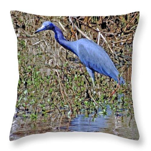 Heron Throw Pillow featuring the photograph Blue Heron Louisiana by Lizi Beard-Ward