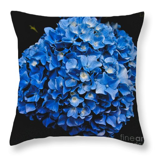 Blue Hydrangea Throw Pillow featuring the photograph Blue Hydrangea 1 by William Norton