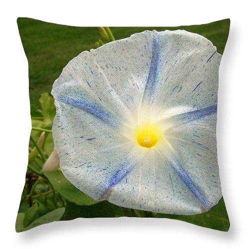 Morning Glory In Full Bloom With Bright Yellow Center Blue Star And White With Blue Speckles Everywhere Throw Pillow featuring the photograph Spectacular Blue Morning Glory by Belinda Lee