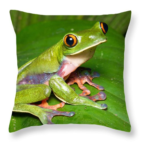 Blue-sided Tree Frog Throw Pillow featuring the photograph Blue-sided Tree Frog by BG Thomson