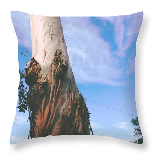 Sky Throw Pillow featuring the photograph Blue Sky With Paper Bark by Judith Kitzes