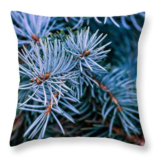 Macro Throw Pillow featuring the photograph Blue Spruce by Steve Harrington
