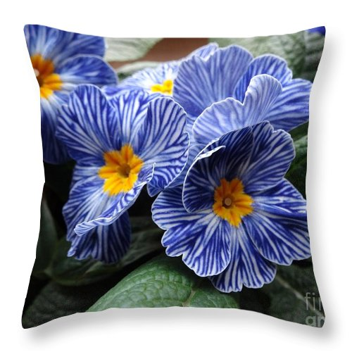 Spring Throw Pillow featuring the photograph Blue Striped Primulas by Dana Hermanova