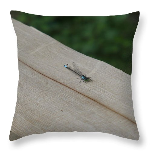 Blue Throw Pillow featuring the photograph Blue Tipped Dragon Fly by Nicki Bennett