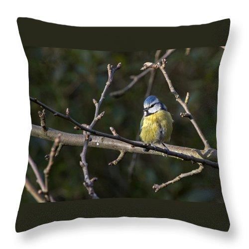 Bird Throw Pillow featuring the photograph Blue Tit by Les OGorman