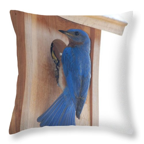 Bird Throw Pillow featuring the photograph Bluebird Of Happiness by Kenny Glover