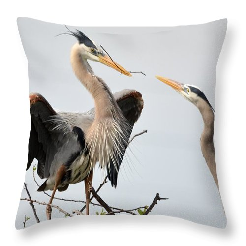 Blue Herons Throw Pillow featuring the photograph Blues Building A Nest by Patricia Twardzik