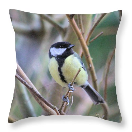 Bluetit Throw Pillow featuring the photograph Bluetit by Gordon Auld