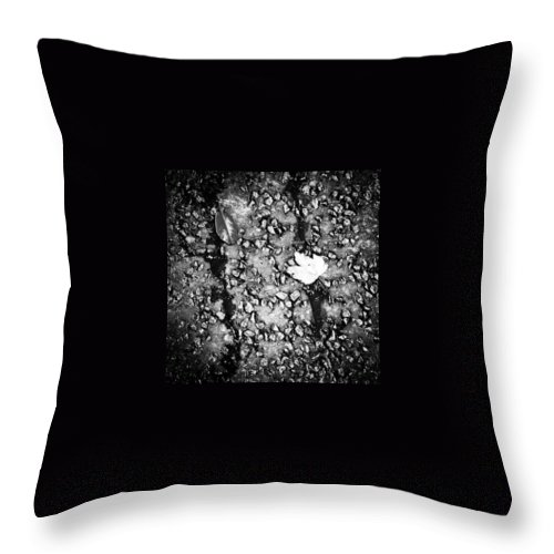 Beautiful Throw Pillow featuring the photograph Leaves in the Wet Black 'n' White by J Love